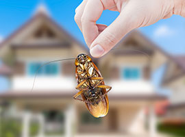 A woman's hand holding a cockroach outside with a house in the background background,
