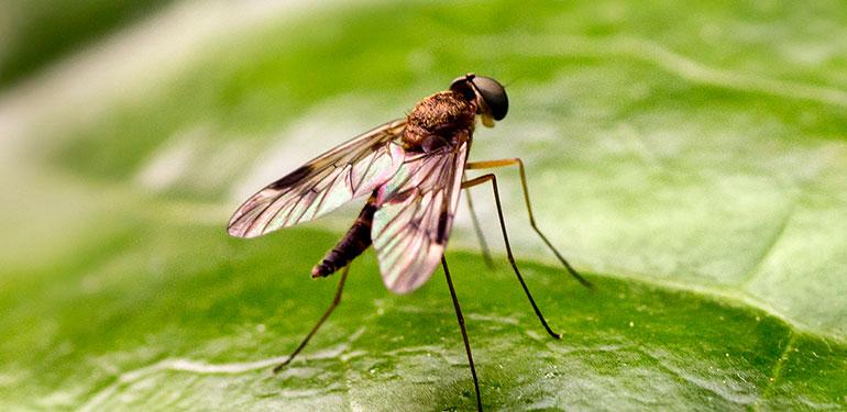 Un primer plano de una mosquilla sobre una hoja.