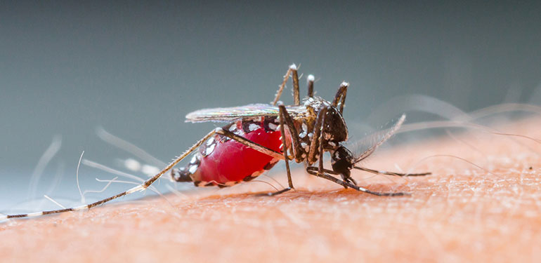 7 Facts About Mosquitoes Why Do Mosquitoes Bite More Raid