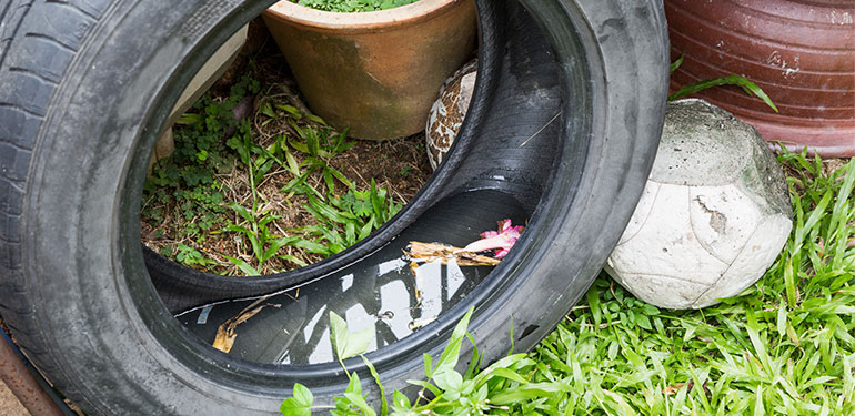 A used tire sitting in grass with stagnant water sitting in the well.