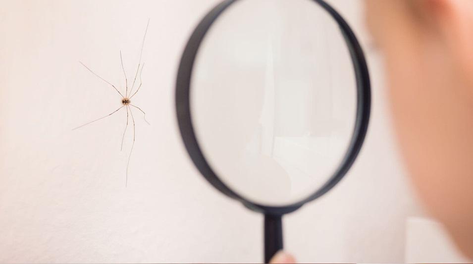 Niño observando una araña en la pared a través de una lupa.