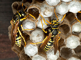 Wasps on a hive.