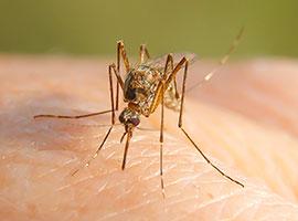 Un primer plano de un mosquito que pica la mano de una persona.