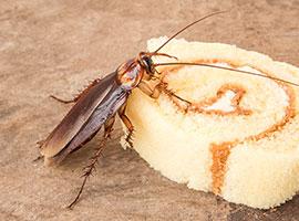 Una cucaracha comiendo un pedazo de pastel.