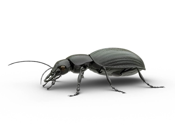 Side-view illustration of a beetle.