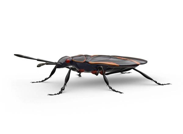Side-view illustration of a boxelder bug.