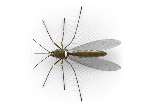 Top-view illustration of a mosquito.