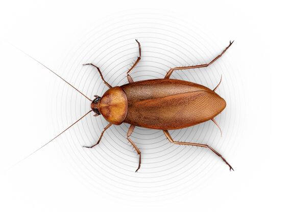 Ilustración superior de una cucaracha grande.