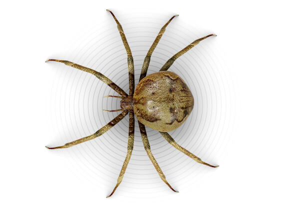Top-view illustration of a spider.