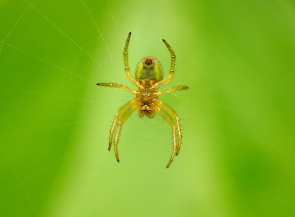 Close-up image of a spider hanging from a spider web.