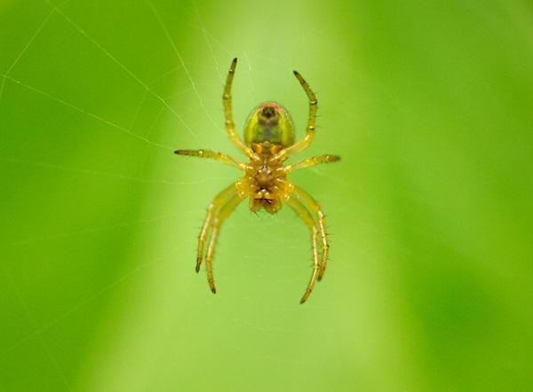 Imagen en primer plano de una araña colgando de una telaraña.