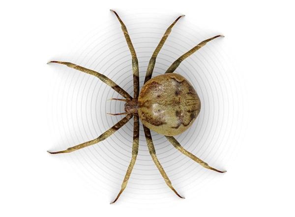 Ilustración superior de una araña.