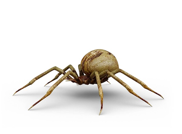 Side-view illustration of a spider.