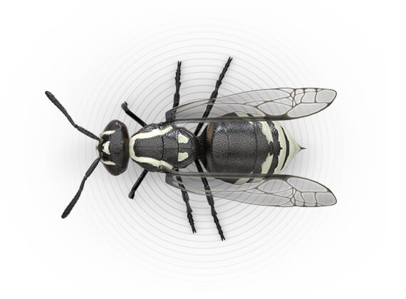 Top-view illustration of a hornet.