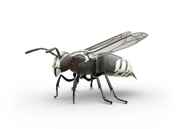 Side-view illustration of a hornet.