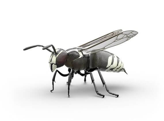 Ilustración lateral de un avispón.