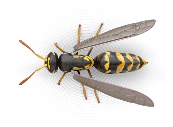 Top-view illustration of a wasp.