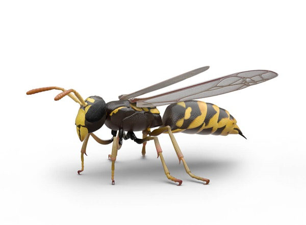 Side-view illustration of a wasp.