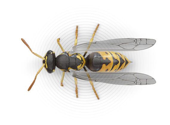 Ilustración superior de una avispa amarilla.
