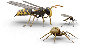 Illustrations of wasp, mosquito and spider