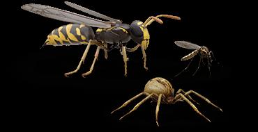 Ilustraciones de avispa, mosquito y araña