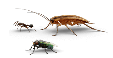 Illustrations of ant, cockroach and fly