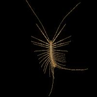 centipedes-large