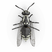 hornets-large