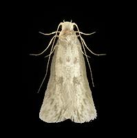 moths-clothes-large