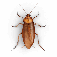 roaches-large-large