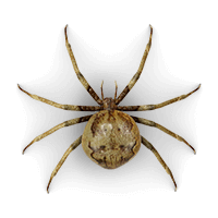 spiders-large