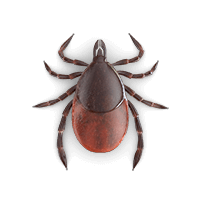 ticks-large