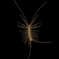 Ilustración de un ciempiés