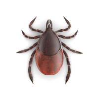 Tick illustration