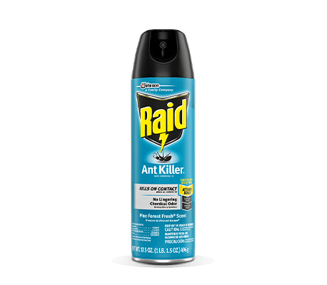 Raid-Ant-Killer-26-Card-2X